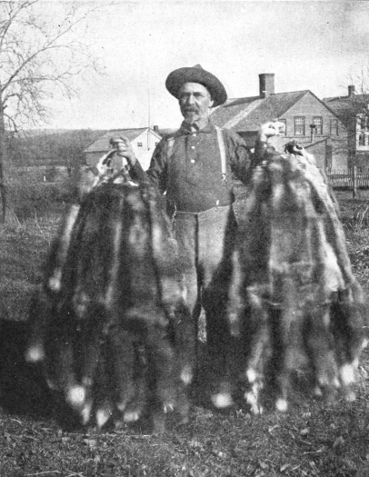 Adirondack_Trapper_holding_fox_pelts_(cut)